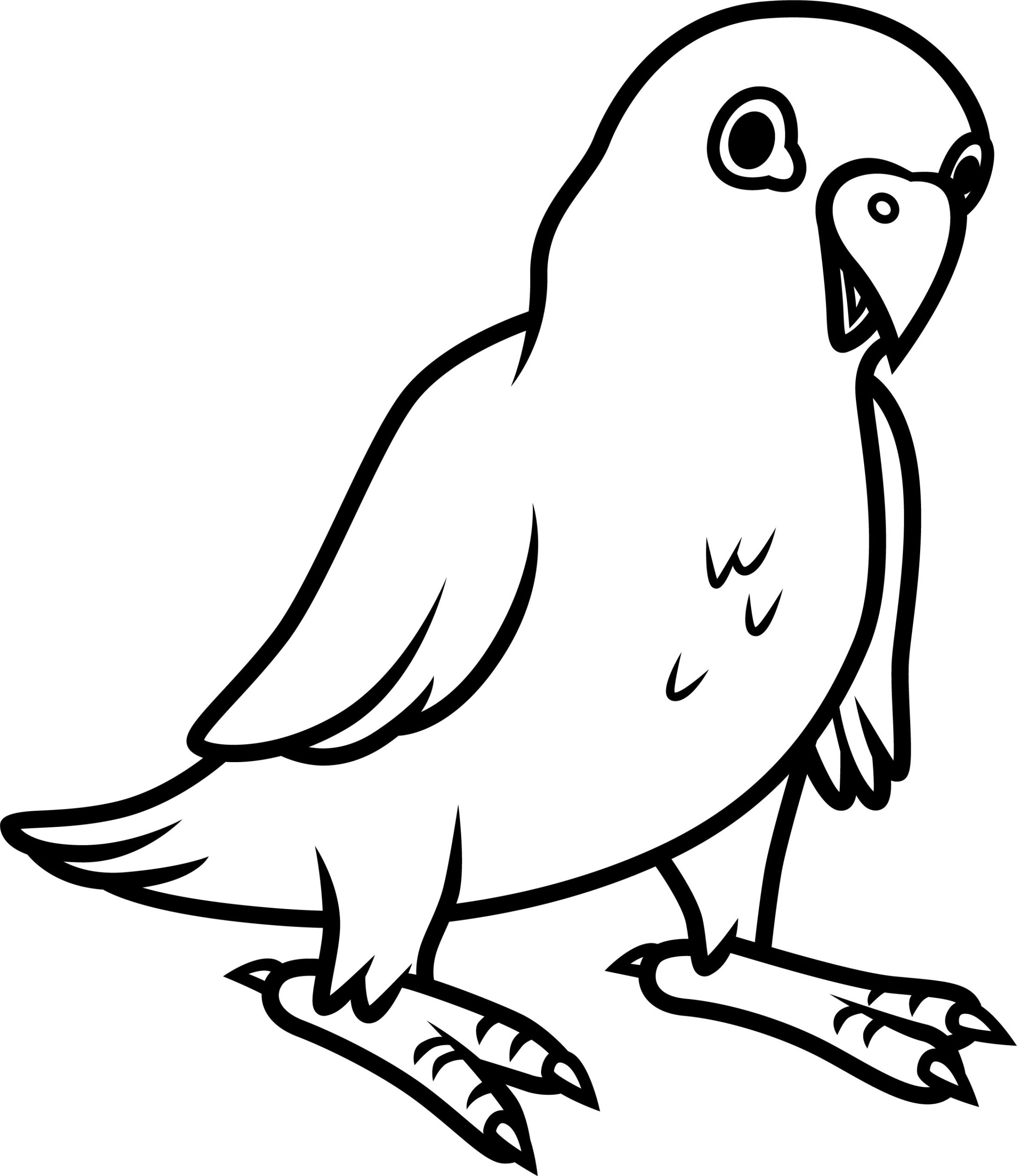 Parrot colouring page